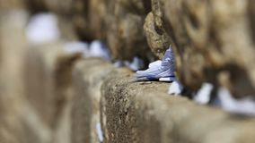 Wishes and prayers in Western wall cracks, Jerusalem, Israel Stock Image