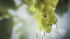 Wishihg a bunch of fresh heaithy green grapes stock footage