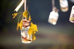Wishing bottle. Wishing golden maple leaves hanging bottle Stock Images