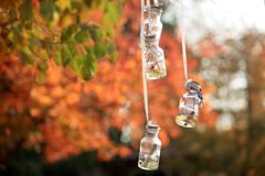 Wishing bottle. Of maple trees Royalty Free Stock Image