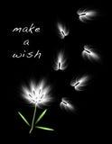 Wishing Flower Stock Photo