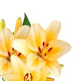 A wishing lily flowers. Border isolated white Stock Photo