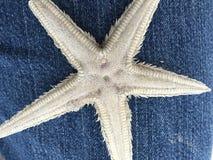 Wishing Starfish Stock Image