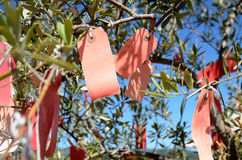 Wishing tree Royalty Free Stock Photography