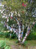 Wishing tree. Orient tradition Stock Photography
