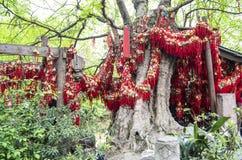 Free Wishing Tree, China Royalty Free Stock Photography - 28239347