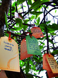 Wishing Tree. Colorfull wishes hanging in a tree Stock Photos