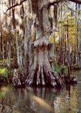 Wishing Tree stock photo