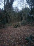 Wishing Tree Reservoir Royalty Free Stock Photos