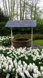 Wishing well surrounded by white hyacinthus and narcissus Stock Photo