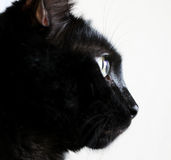 Wiskers Image stock