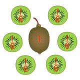 Wiskundige spelen voor kinderen Bestudeer de fractiesaantallen, voorbeeld met van een kiwi stock illustratie