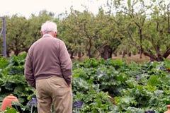 Wisley, Суррей, Великобритания - 30-ое апреля 2017: Более старый старший человек идя amo стоковое изображение rf