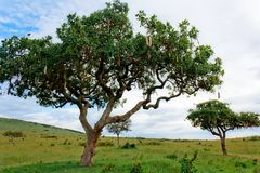 wisp δέντρων Στοκ φωτογραφία με δικαίωμα ελεύθερης χρήσης