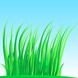 Wisp of lush grass. Stock Photo
