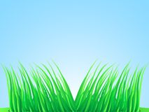 Wisps of lush grass. Stock Photography