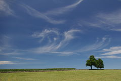 Wispy облака на летний день - ландшафт Стоковое Изображение RF