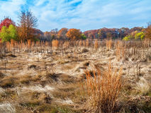 Wispy Autumn Field Royaltyfria Bilder
