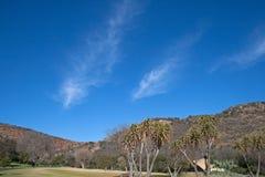 WISPY chmury W niebie NAD WALTER SISULU ogródy botaniczni obrazy stock