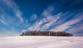 Wispy clouds over a cluster of trees and snow covered farm field Stock Photography