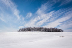 Wispy clouds over a cluster of trees and snow covered farm field Royalty Free Stock Photos