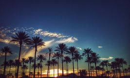 Wispy feathers of clouds overlooking palm trees. Arizona wispy feathery clouds over looking these palm trees through this sunset Stock Photos