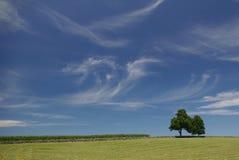 Wispy moln på en sommardag - landskap royaltyfri bild