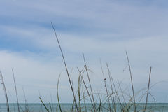 Wispy seagrass. Closeup with blue sky and sea in background Stock Photography