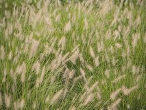 Wispy Weeds Stock Image