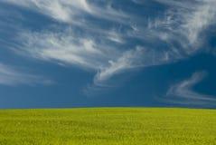 Wispy Wolken über der Wiese Stockfotos