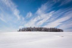 Wispy Wolken über einer Gruppe von Bäumen und von Schnee setzten Bauernhofforderung durch lizenzfreie stockfotos