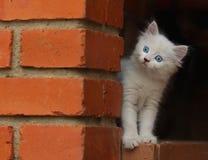 Wissbegieriges Kätzchen Stockbilder