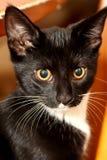 Wissbegieriges Kätzchen Stockbild