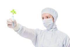Wissenschaftler überprüft einen Betriebssprössling in einem Reagenzglas Lizenzfreies Stockfoto