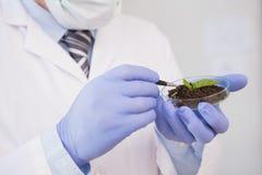 Wissenschaftler, der Anlage in Petrischale analysiert stockfoto