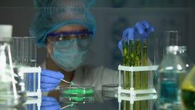 Wissenschaftler, der grünes Pulver Rohr mit Grünpflanze, Schädlingsbekämpfungsmitteleinfluß hinzufügt stock footage