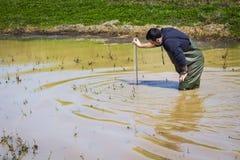 Wissenschaftler, der Klimawasserqualität in einem Sumpfgebiet misst stockfoto