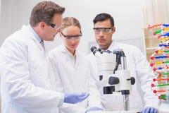 Wissenschaftler, die aufmerksam mit Mikroskop arbeiten lizenzfreie stockfotos