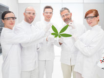Wissenschaftler, die ein genetisch geändertes Blatt halten stockbilder
