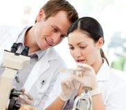 Wissenschaftler, die ein Plättchen unter einem Mikroskop betrachten stockbild