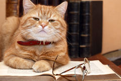 Wissenschaftler-Katze Stockbilder