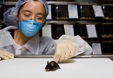 Wissenschaftler mit schwarzer Maus stockfotografie