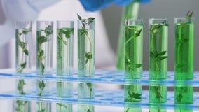 Wissenschaftliches Experiment - Blumen und Anlagen in den Reagenzgläsern stock footage