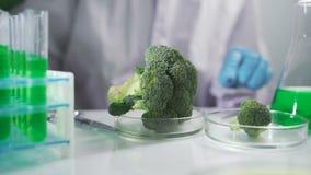 Wissenschaftliches Experiment - Blumen und Anlagen in den Reagenzgläsern stock video footage