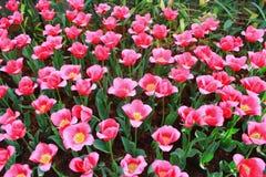 Śwista kwiat zdjęcia stock