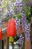 Wistariabloemen Stock Afbeelding