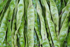 Wisted cluster bean Royalty Free Stock Images