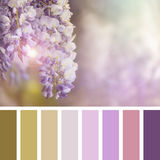 Wisteri Palette royalty free stock photography