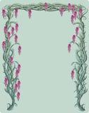 wisteria αμπέλων Στοκ Εικόνες