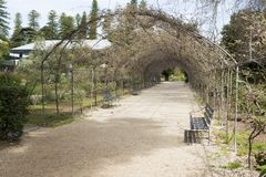 Wisteria Arbor Off Season. Adelaide, South Australia, Australia - September 10, 2017: Arching metal framed arbor covered in wisteria off season with seating Stock Photography